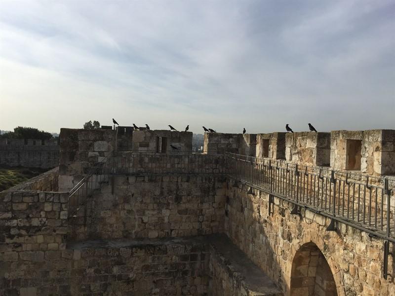 שיקום טיילת חומות העיר העתיקה, ירושלים תמונה מספר 16
